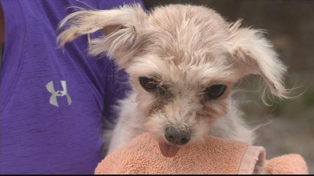 11 dogs were originally seized from a Mission Valley dog breeding kennel in late July. (MTN News photo)