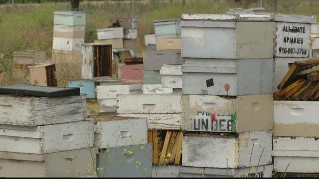 Hundreds of bee colonies stolen in this case from northern California belonged to a beekeeper from Montana. (CBS News photo)