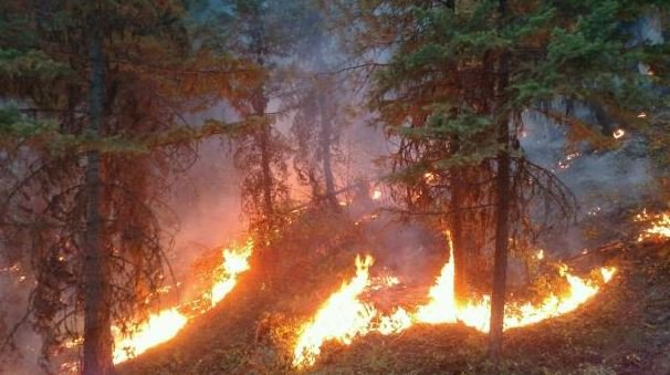 A photo of night operations on the West Fork fire. (inciweb.org photo)