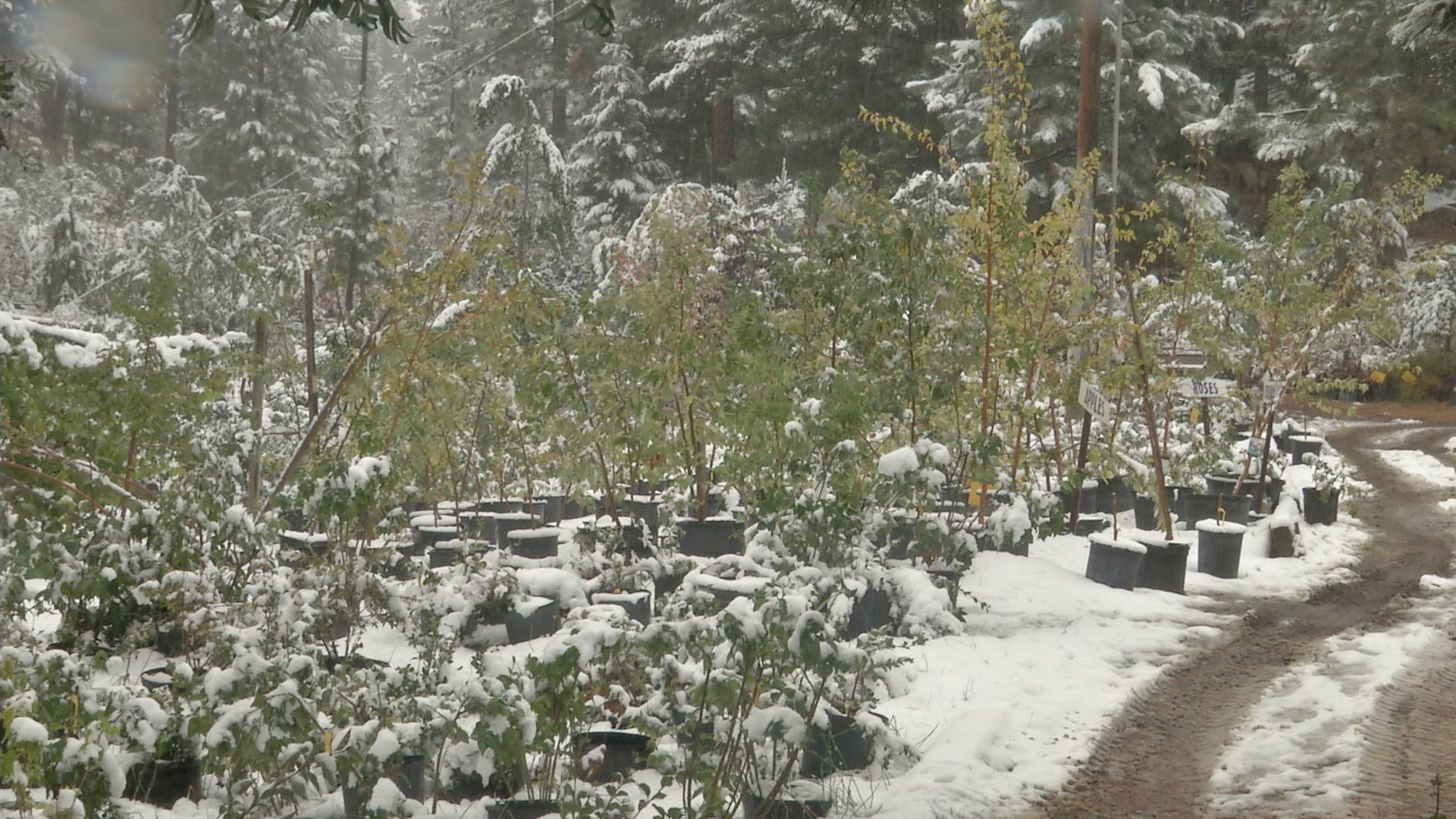 Greg Chadwick, owner of Chadwick Nursery, says it's time for local gardeners to start getting ready for fall.(MTN News photo)