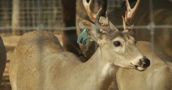 There's been an increase of CWD in Wyoming and Canada.