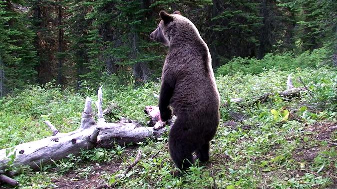 (photo credit: Montana Fish, Wildlife and Parks)
