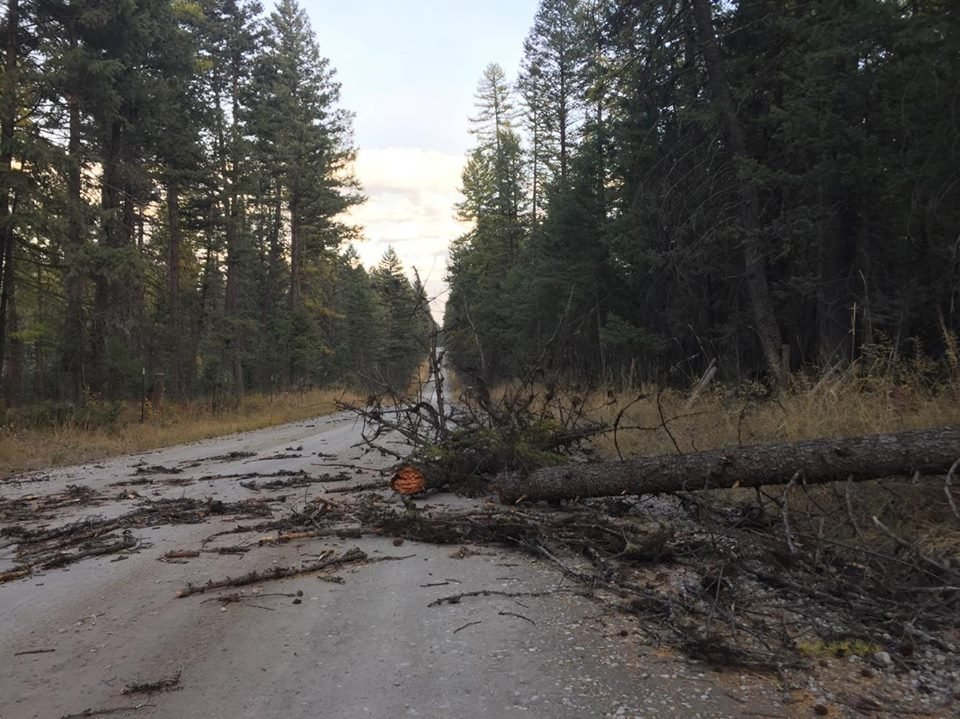 Trees and branches caused thousands of power outages. (MTN News photo)