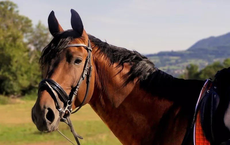 Summertime can present some health challenges for horses and their owners. (MTN News photo)