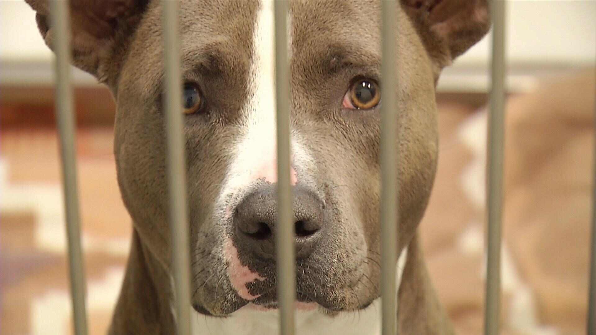 Dogs For Adoption Billings Montana