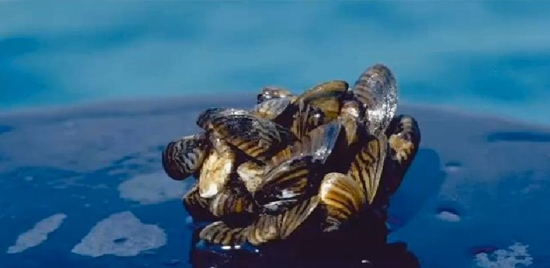 Invasive species were first discovered in Montana's waters in October 2016. (MTN News photo)