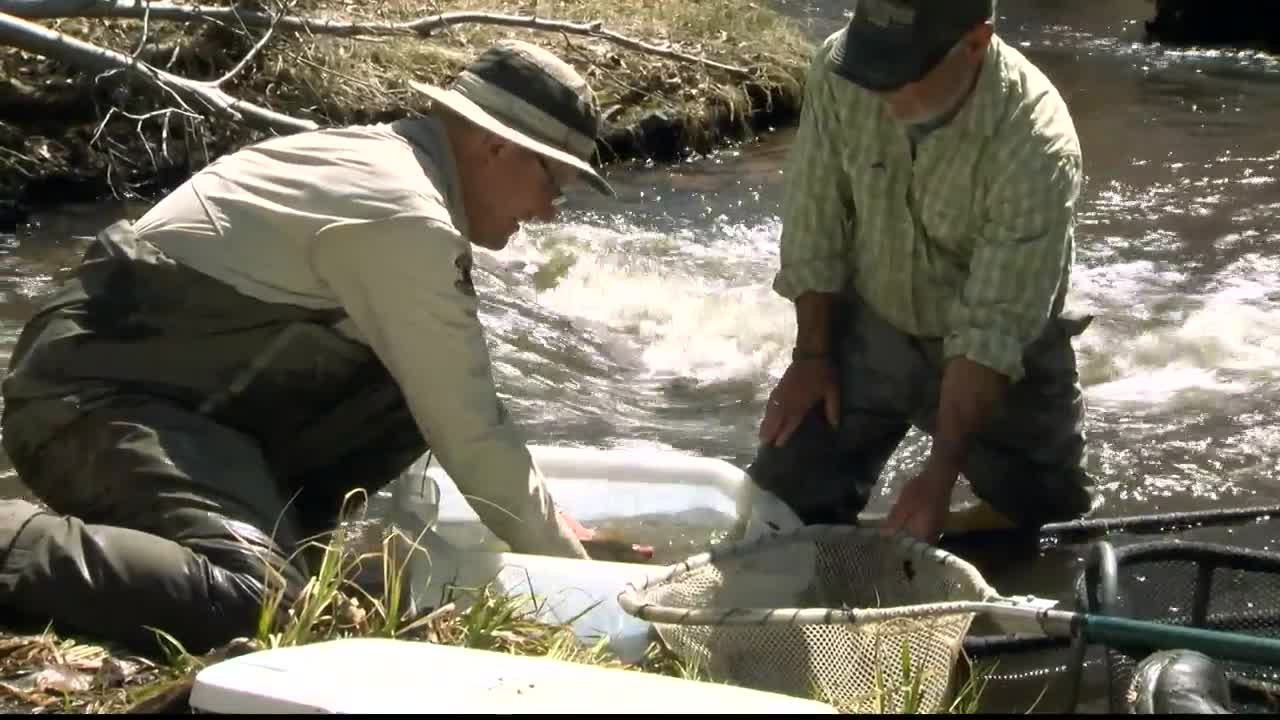 Montana has 59 native fish species and many of them face hard times.