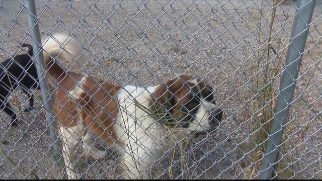 Flathead county animal shelter near capacity krtv news for Bennett motors great falls mt